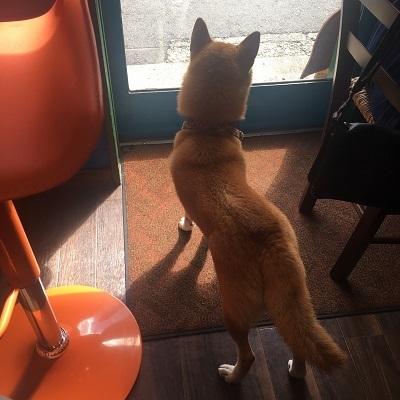 ハバカーる犬.jpg